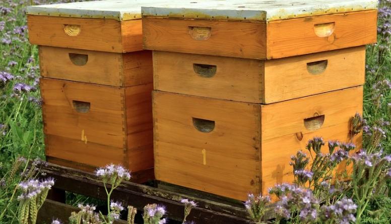ruches-jardin